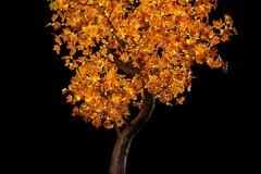NBL_200_Autumn_Y__0053