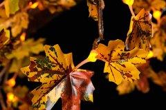 Detail_Autumn_Y_0177