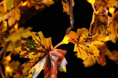 Detail_Autumn_Y_0177