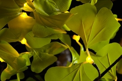 Detail_Ginko_Y_0282